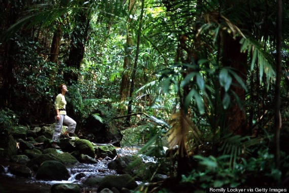 AUSTRALIA, QUEENSLAND, DAINTREE NATIONAL PARK, WOMAN IN RAINFOREST